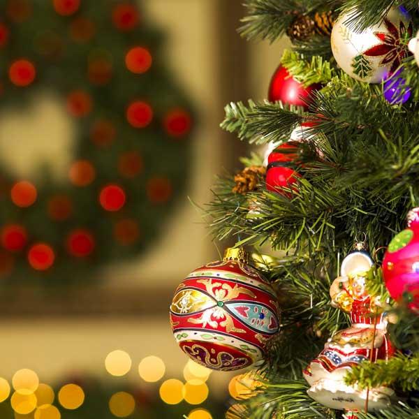 سنبل تقس در کریسمس