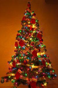 عکس درخت کاج تزئینی