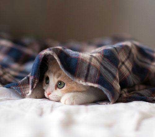 عکس با نمک از گربه های زیبا