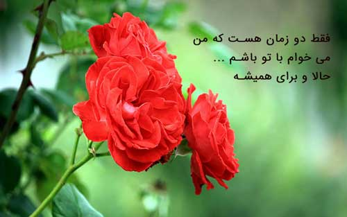 عکس نوشته گل رز قرمز