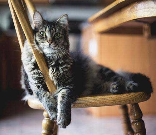 عکس های زیباترین گربه ها برای پروفایل