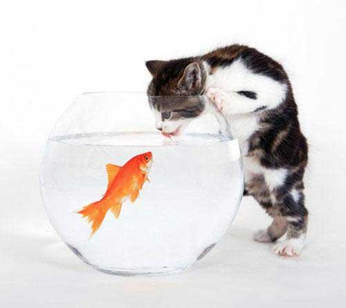 عکس پروفایل با نمک گربه + ماهی