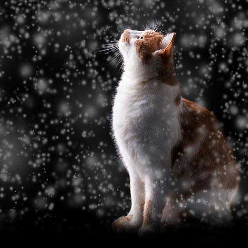 عکس پروفایل زیبا از گربه
