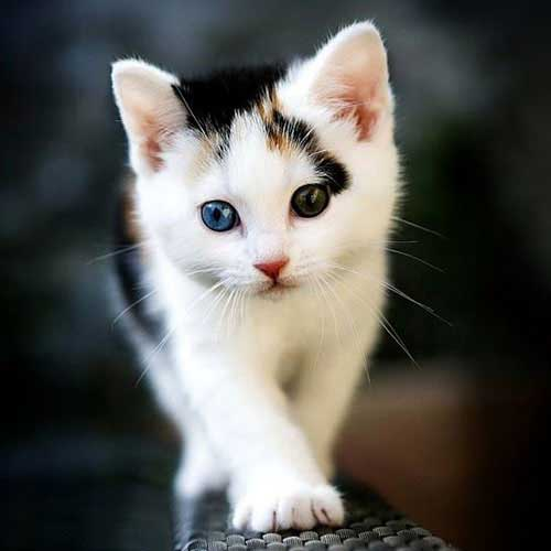 عکس پروفایل گربه زیبا