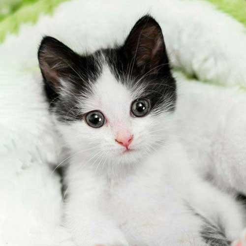 عکس پروفایل گربه نار و کوجولو