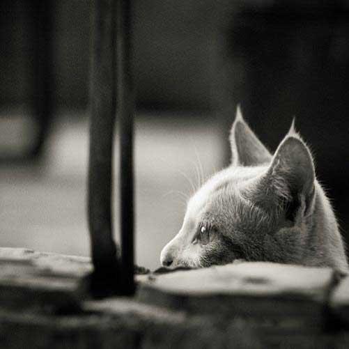 عکس پروفایل گربه ناز