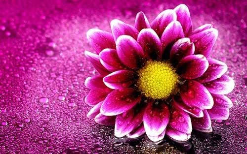 عکس پروفایل گل خاص برای واتساپ