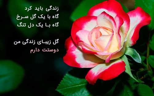 عکس پروفایل گل زیبا و عاشقانه رز سرخ با متن رومانتیک
