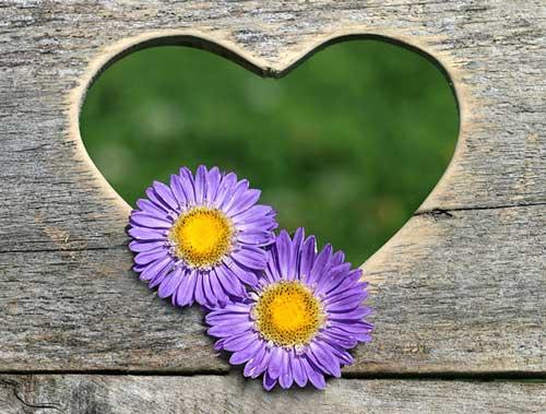 عکس پروفایل گل عاشقانه و قشنگ فانتزی