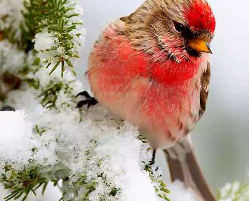 عکس پروفایل گنجشک در برف