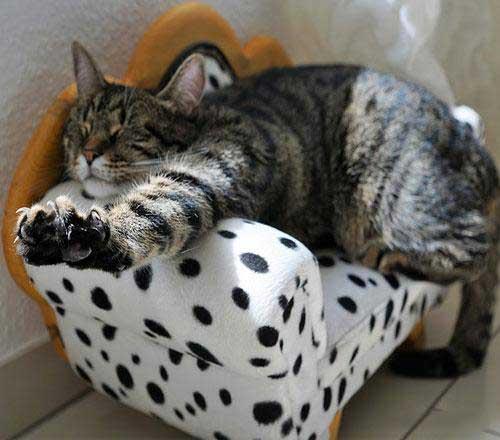 عکس گربه بامزه برای پروفایل