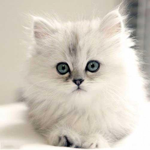 عکس گربه زیبا چشم