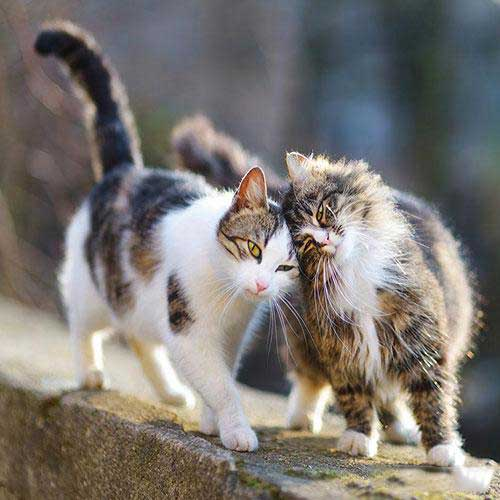 عکس گربه ناز و کوچک