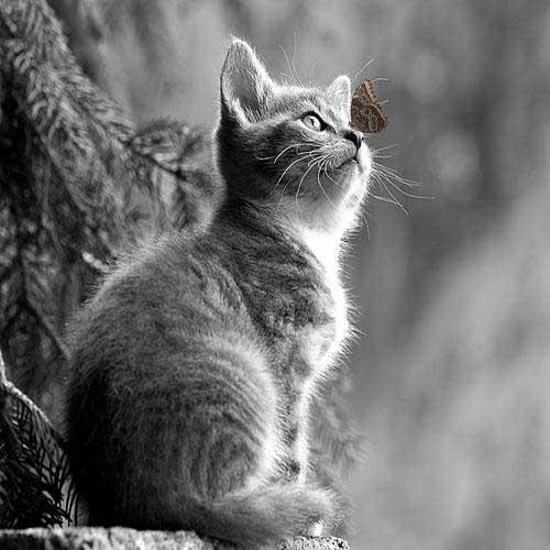 عکس گربه های خانگی