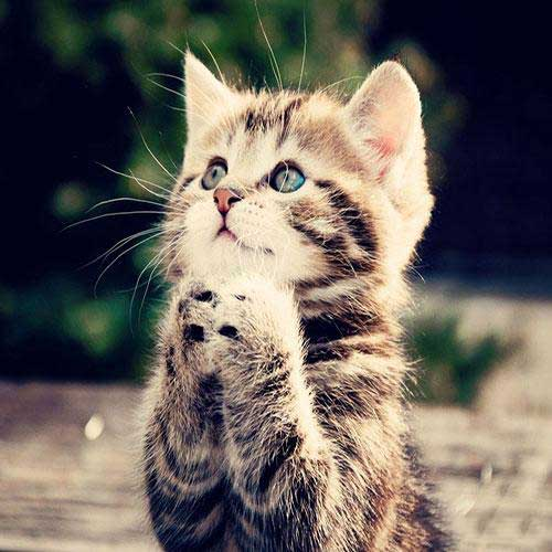 عکس گربه های زیبای جهان