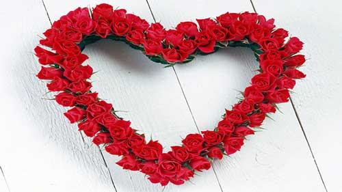 عکس گل عشق به شکل قلب