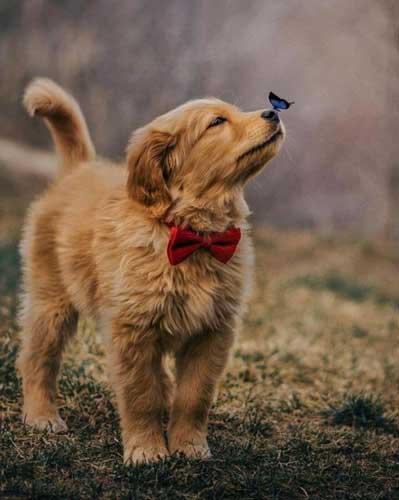 عکس پروفایل سگ + متن خاص برای سگ