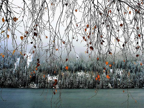 طبیعت زمستانی رودخانه