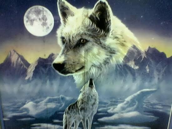 عکس متن دار درباره گرگ