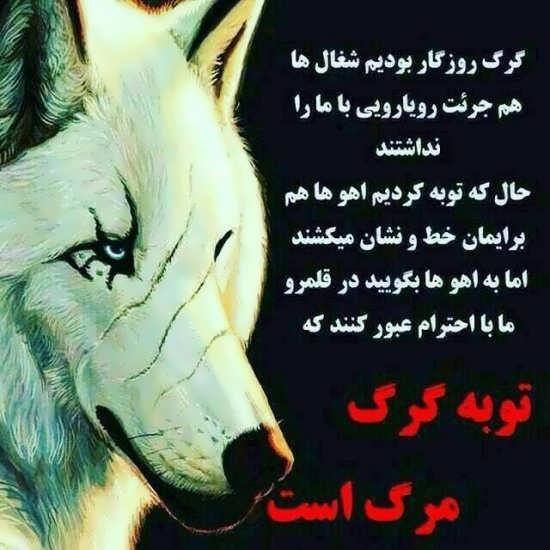 عکس پروفایل زیبا از گرگ