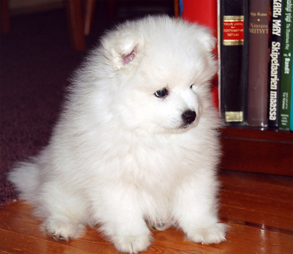پروفایل سگ خوشگل سفید