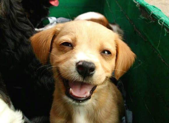 عکس پروفایل سگ بامزه