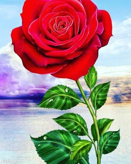 تصویر از عکس پروفایل گل رز + جملات عاشقانه احساسی