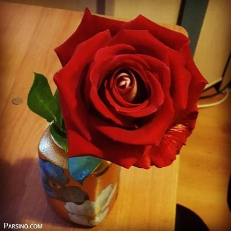 گل رز قرمز 18