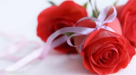 گل رز قرمز 23