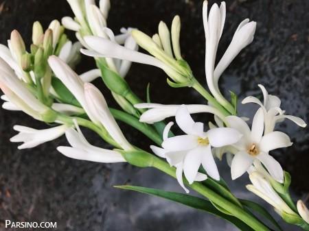 تصویر از عکس پروفایل گل مریم + جملات عاشقانه احساسی