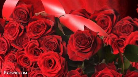 رز قرمز عاشقانه 5