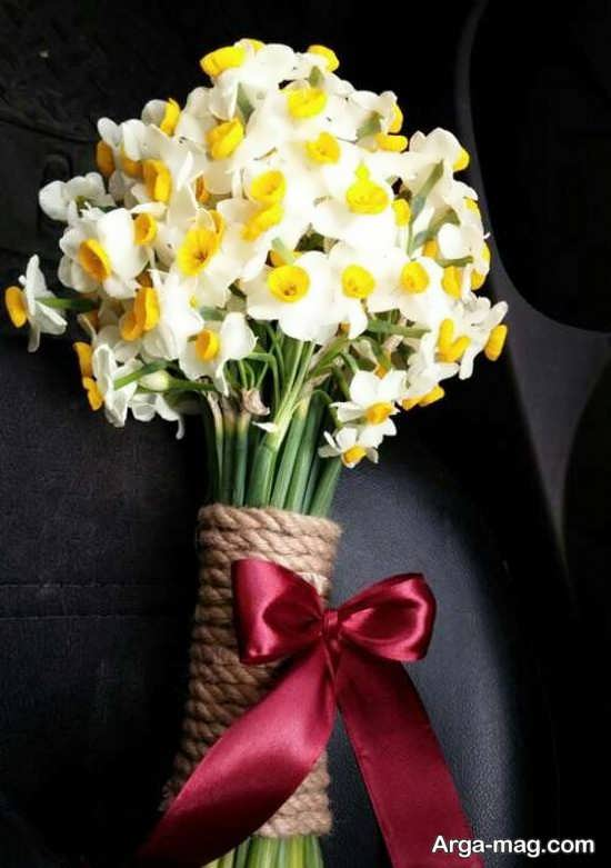 Narges flower photo 27