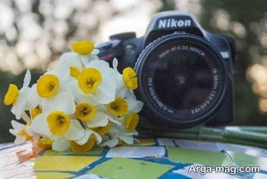 Narges flower photo 28