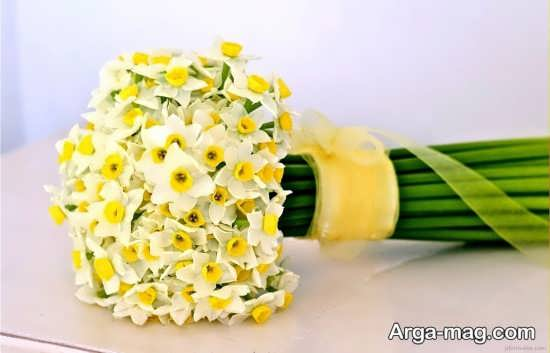 Narges flower photo 30