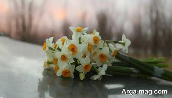 Narges flower photo 4
