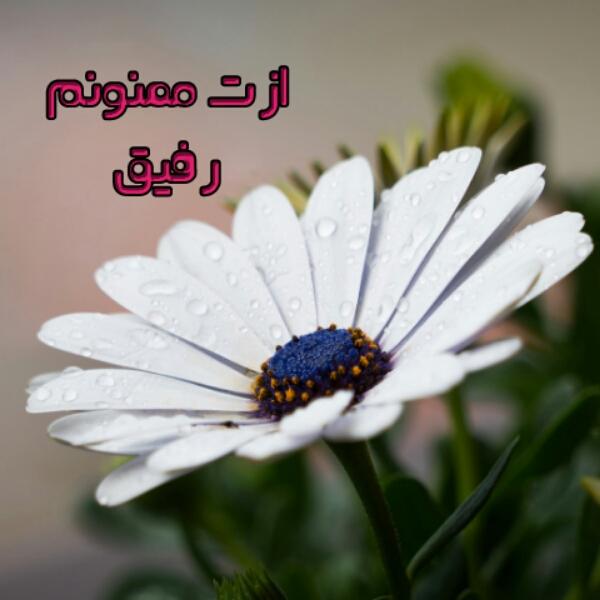 نوشته ازت ممنونم رفیق 1