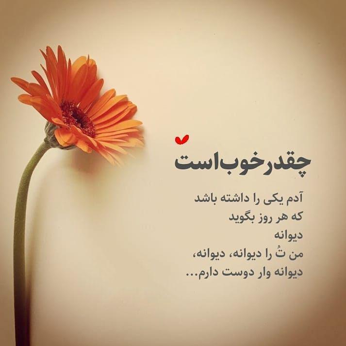 993997591 talab org