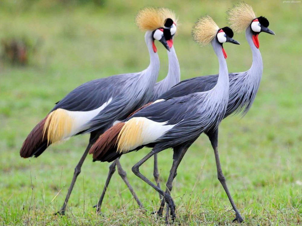 Animal Beautiful Bird