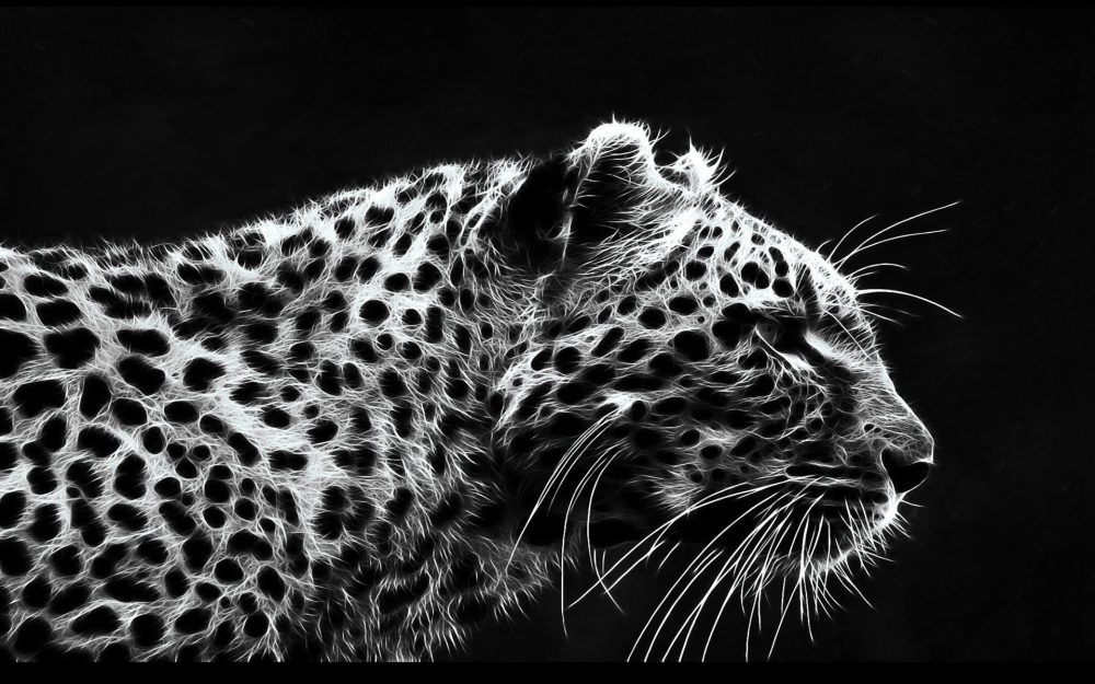 Leopard Wallpapers 3