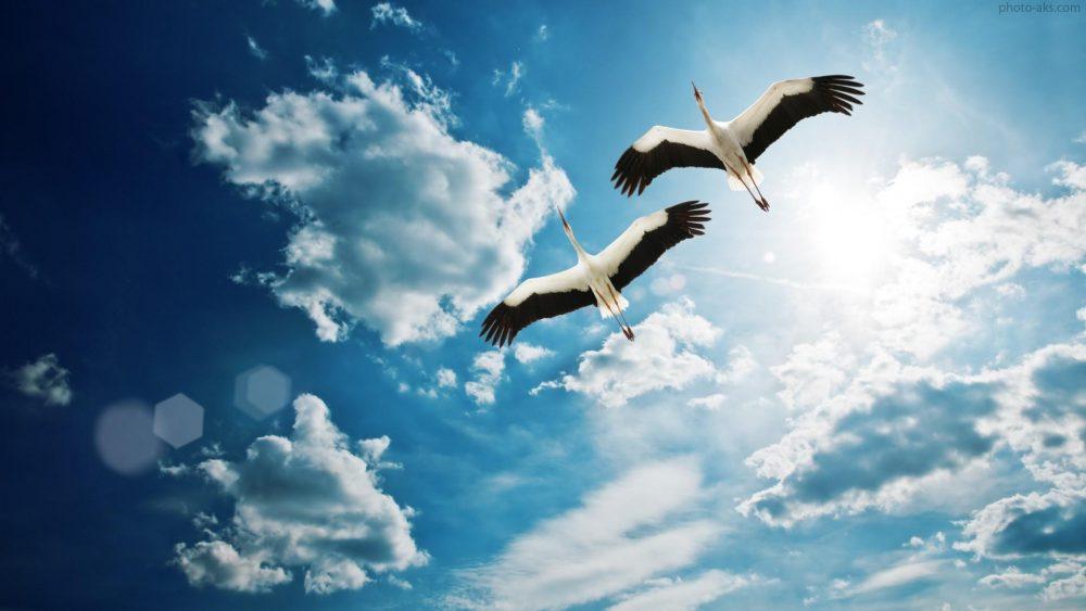 birds flying together sky