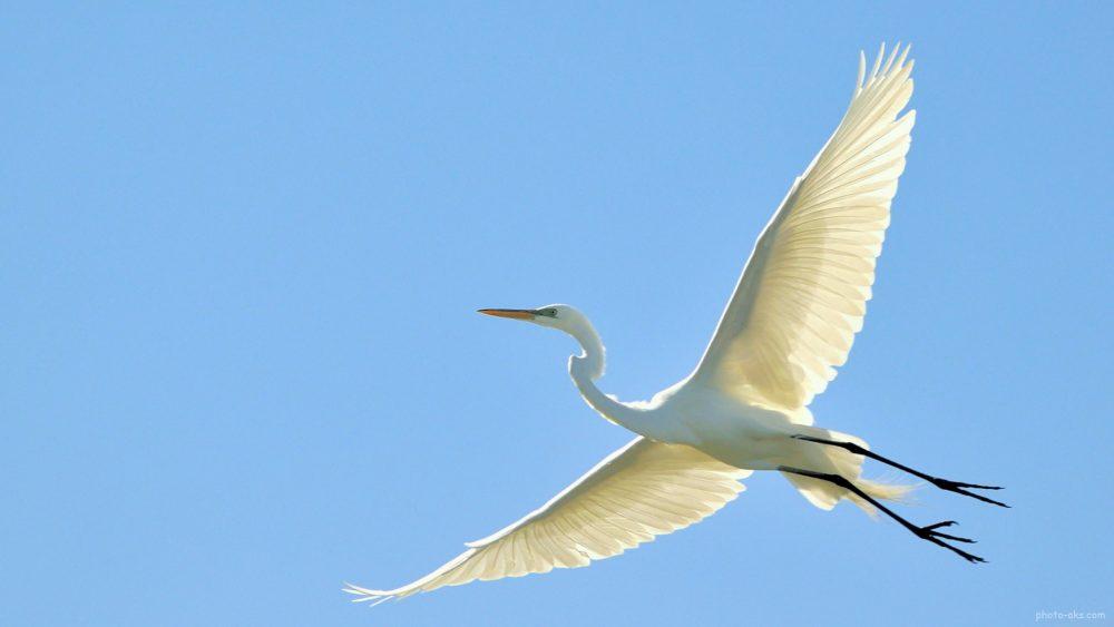 stork sky fly